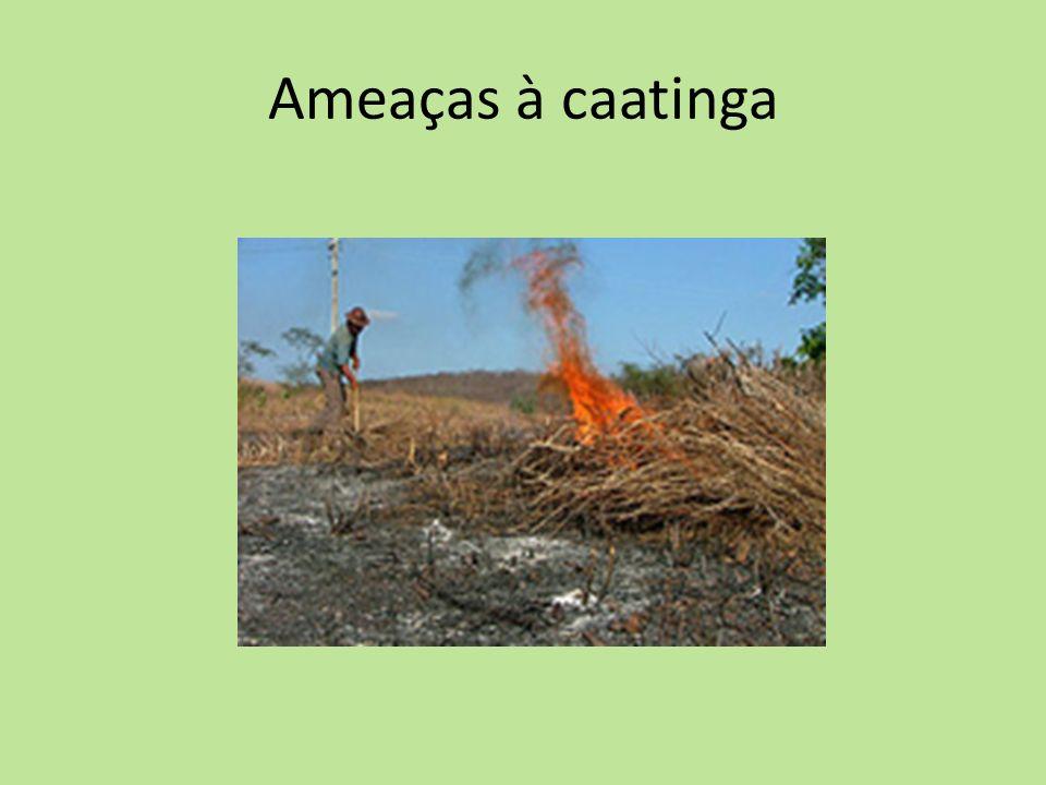 Ameaças à caatinga