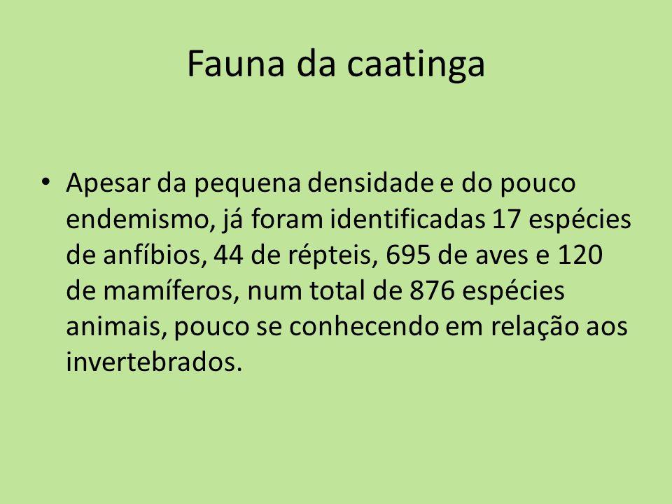Fauna da caatinga Apesar da pequena densidade e do pouco endemismo, já foram identificadas 17 espécies de anfíbios, 44 de répteis, 695 de aves e 120 d