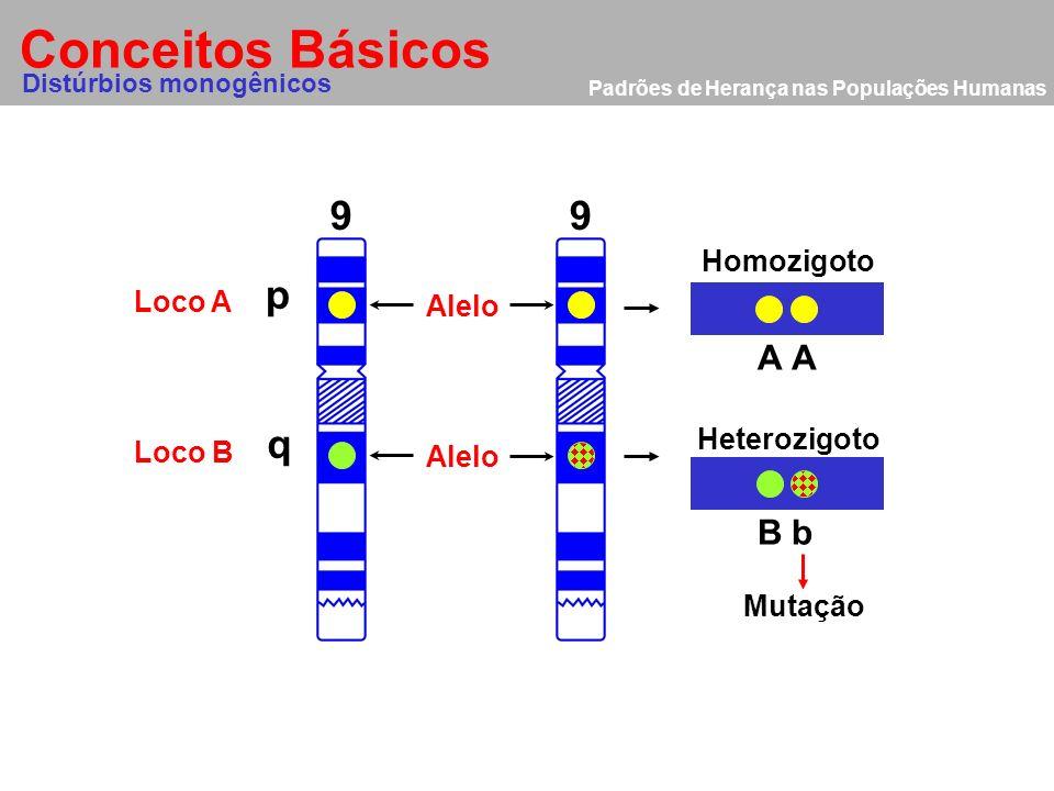 Padrões de Herança nas Populações Humanas Conceitos Básicos Alelo 9 p q 9 Distúrbios monogênicos Loco A Loco B