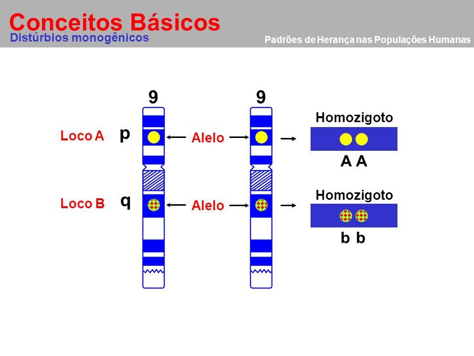 Padrões de Herança nas Populações Humanas Conceitos Básicos Alelo 9 p q Homozigoto Heterozigoto Mutação AA Bb 9 Distúrbios monogênicos Loco A Loco B