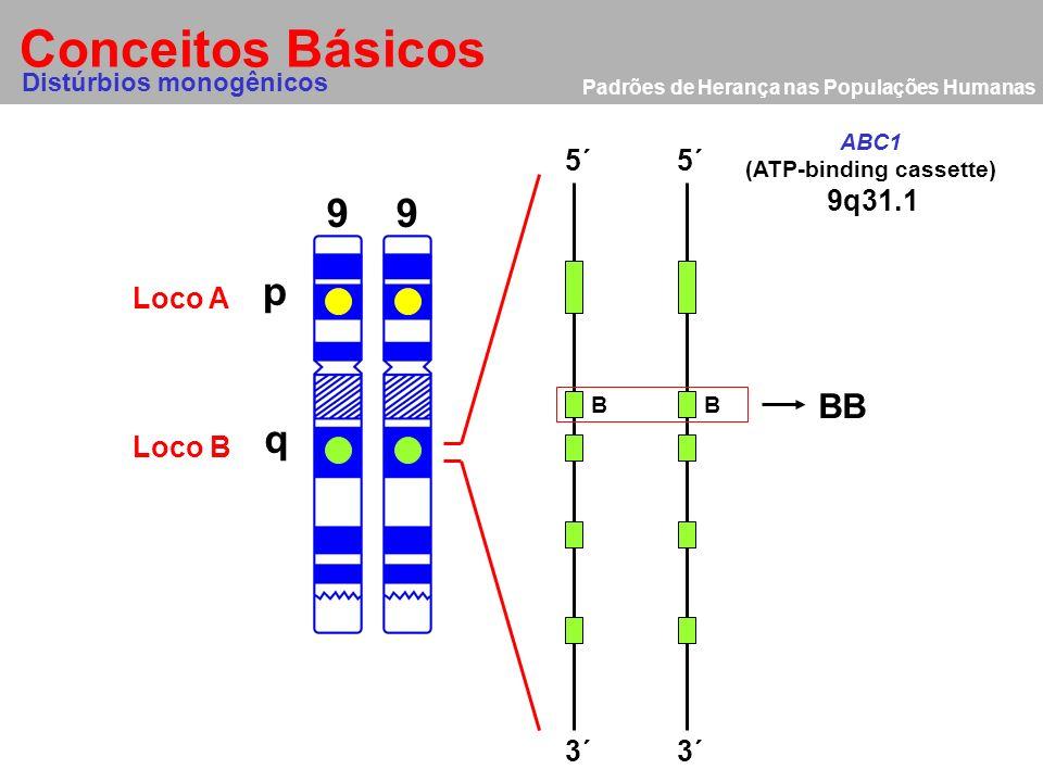 Padrões de Herança nas Populações Humanas Conceitos Básicos 9 p q 9 Distúrbios monogênicos Loco A Loco B 5´ 3´ 9q31.1 ABC1 (ATP-binding cassette) Doen