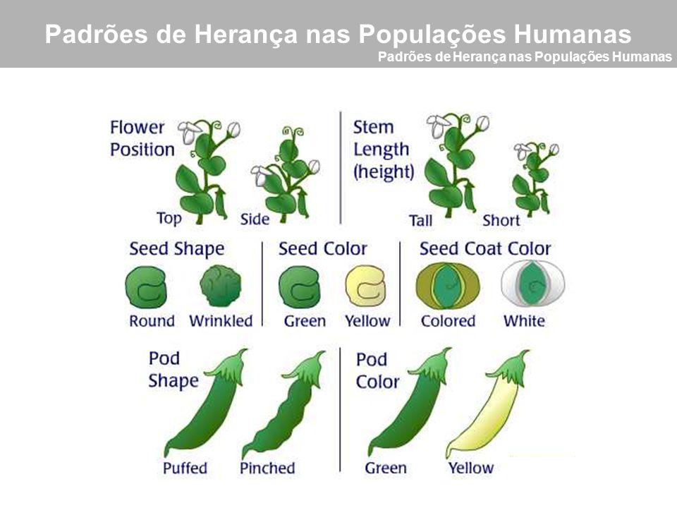 Padrões de Herança nas Populações Humanas Conceitos Básicos Genealogia ou Heredograma É um método usado para o estudo da herança de uma característica a partir das informações coletadas dos familiares