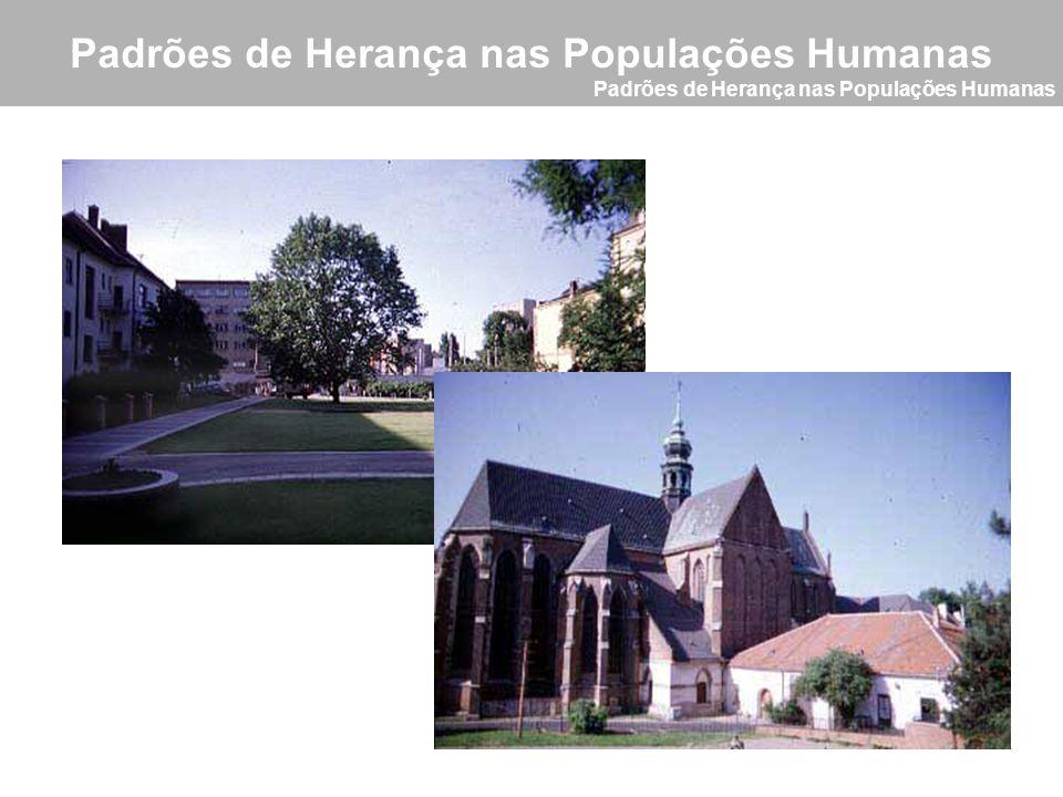 Padrões de Herança nas Populações Humanas Conceitos Básicos Heredograma