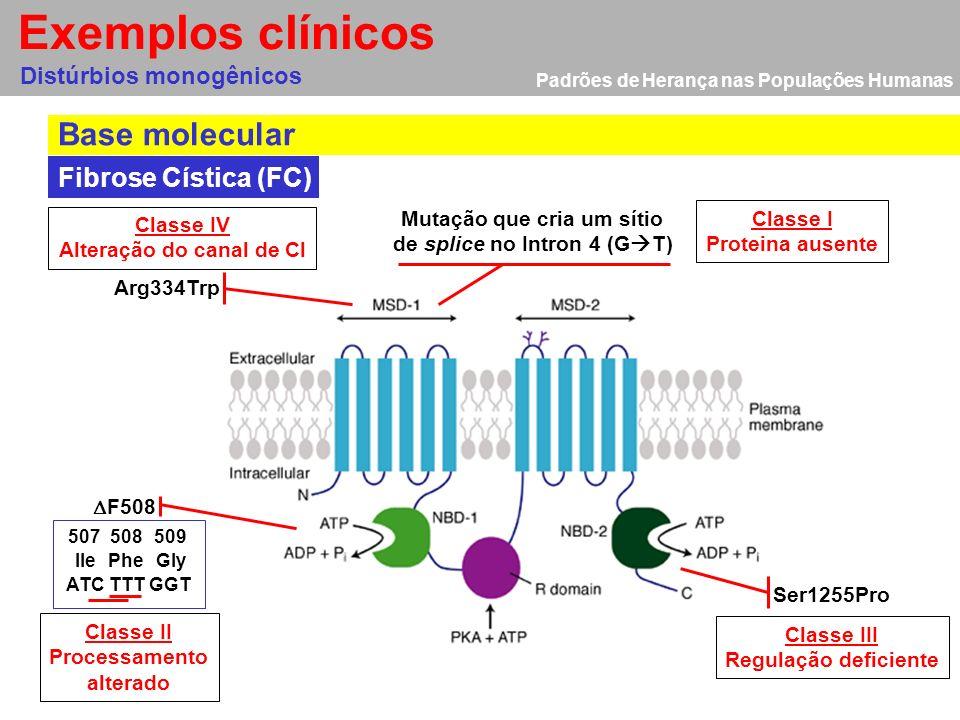 Padrões de Herança nas Populações Humanas Distúrbios monogênicos Localização e estrutura do gene CFTR Fibrose Cística (FC) O gene CFTR está situado no