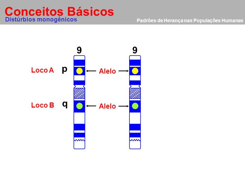 Padrões de Herança nas Populações Humanas Exemplos clínicos Distúrbios monogênicos Doença autossômica recessiva Fibrose Cística (FC) É uma desordem do transporte de ions epitelial causada pela deficiência do gene CFTR (Cystic Fibrosis Transmenbrane Factor).