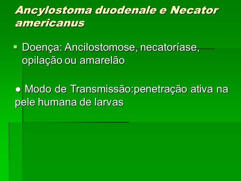 Modo de Transmissão:penetração ativa na pele humana de larvas Modo de Transmissão:penetração ativa na pele humana de larvas Ancylostoma duodenale e Ne