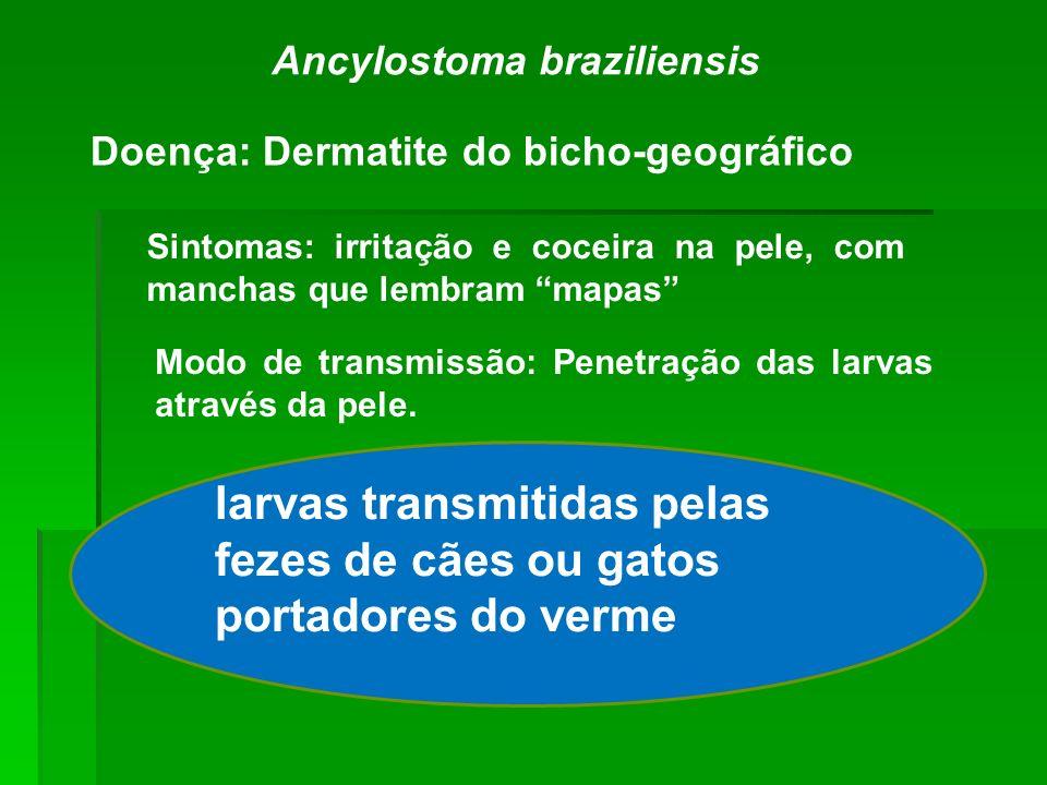 Doença: Dermatite do bicho-geográfico Ancylostoma braziliensis Sintomas: irritação e coceira na pele, com manchas que lembram mapas Modo de transmissã