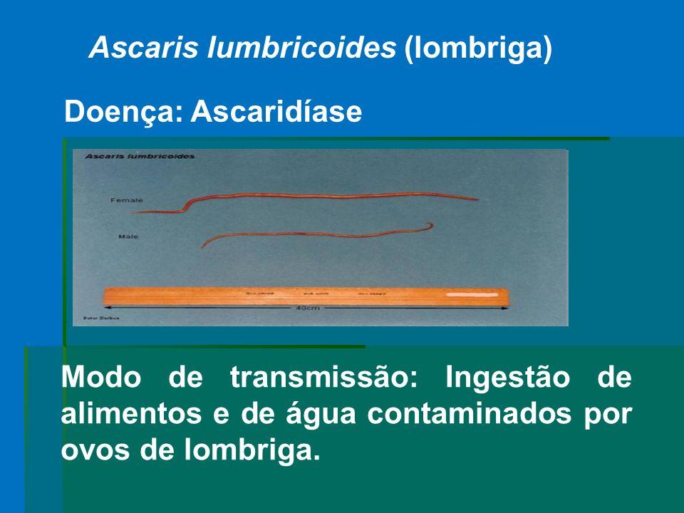 Ascaris lumbricoides (lombriga) Modo de transmissão: Ingestão de alimentos e de água contaminados por ovos de lombriga. Doença: Ascaridíase