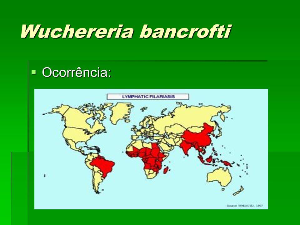 Wuchereria bancrofti Ocorrência: Ocorrência: