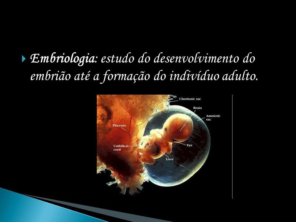 óvulo espermatozóide