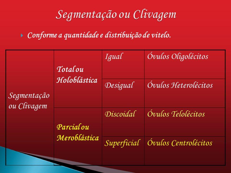 Conforme a quantidade e distribuição de vitelo. Segmentação ou Clivagem Total ou Holoblástica IgualÓvulos Oligolécitos DesigualÓvulos Heterolécitos Pa
