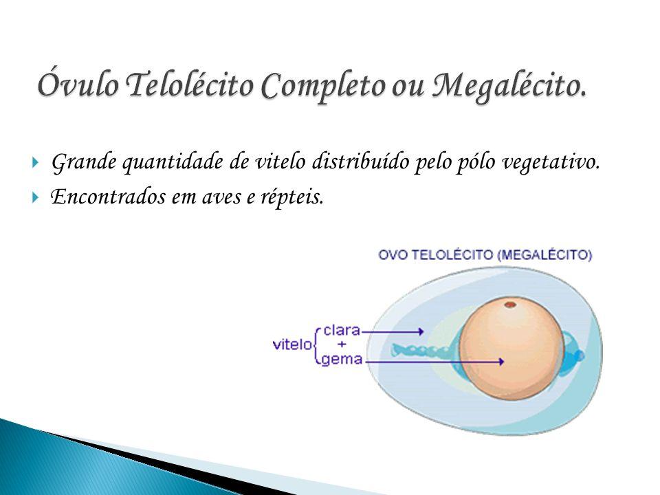Os óvulos centrolécitos concentram uma parte do seu vitelo no centro do citoplasma, ao redor do núcleo e a outra parte na periferia citoplasmática.