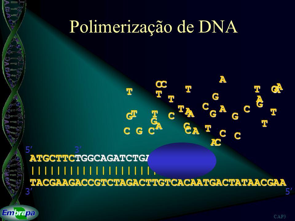 CAP3 Polimerização de DNA TACGAAGACCGTCTAGACTTGTCACAATGACTATAACGAA |||||||||||||||||||||||| 53 ATGCTTCTGGCAGATCTGAACAGTGTT 53A A A A A A A A A A T T T