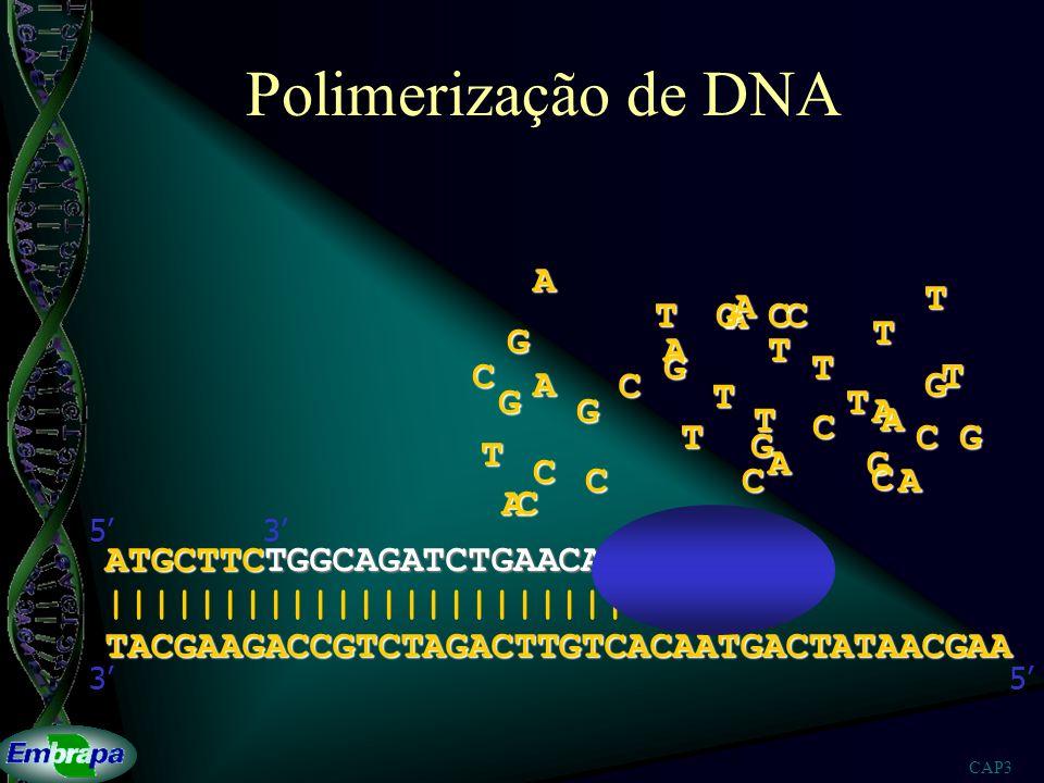 CAP3 Polimerização de DNA TACGAAGACCGTCTAGACTTGTCACAATGACTATAACGAA |||||||||||||||||||||||||||||| 53 ATGCTTCTGGCAGATCTGAACAGTGTTACTG 53A A A A A A A A