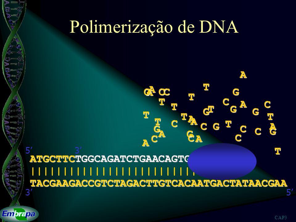 CAP3 Polimerização de DNA TACGAAGACCGTCTAGACTTGTCACAATGACTATAACGAA |||||||||||||||||||||||||||||| 53 ATGCTTCTGGCAGATCTGAACAGTGTTACTGAT 53A A A A A A A