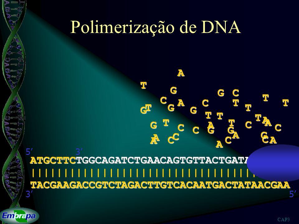 CAP3 Polimerização de DNA TACGAAGACCGTCTAGACTTGTCACAATGACTATAACGAA ||||||||||||||||||||||||||||||||||||||| 53 ATGCTTCTGGCAGATCTGAACAGTGTTACTGATATTGCTT