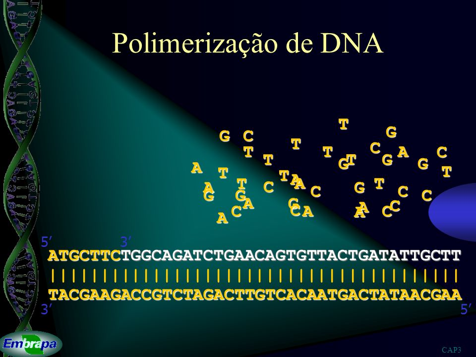 CAP3 Polimerização de DNA TACGAAGACCGTCTAGACTTGTCACAATGACTATAACGAA |||||||||||||||||||||||||||||||||||||||| 53 ATGCTTCTGGCAGATCTGAACAGTGTTACTGATATTGCT