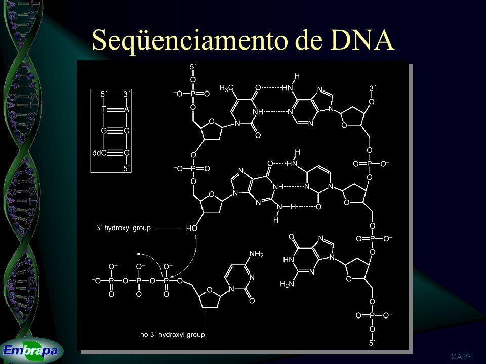 CAP3 Seqüenciamento de DNA