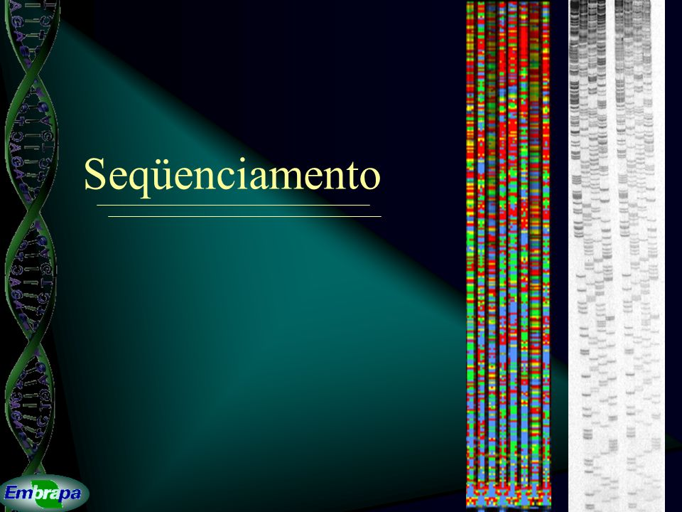 CAP3 Polimerização de DNA o dideoxi TACGAAGACCGTCTAGACTTGTCACAATGACTATAACGAA ||||||||||||||||| 53 ATGCTTCTGGCAGATCT 53A A A A A A A A A A T T T T T T T T T T T G G G G G G G G G C C C C C C C C C C C
