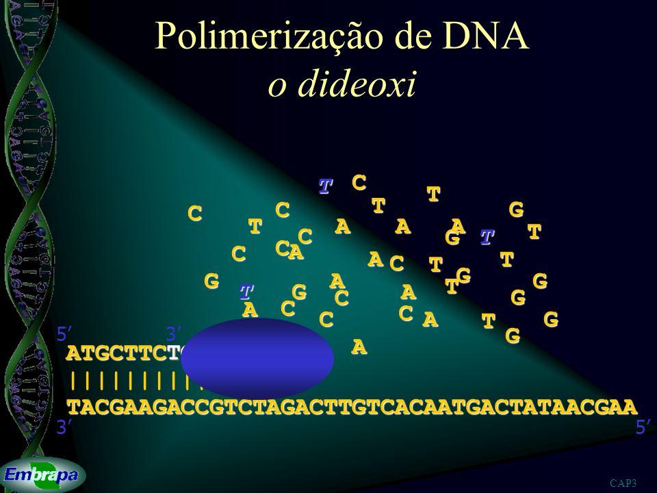 CAP3 Polimerização de DNA o dideoxi TACGAAGACCGTCTAGACTTGTCACAATGACTATAACGAA |||||||||| 53 ATGCTTCTG 53A A A A AA A A A A T T T T T T T T T T T G G G