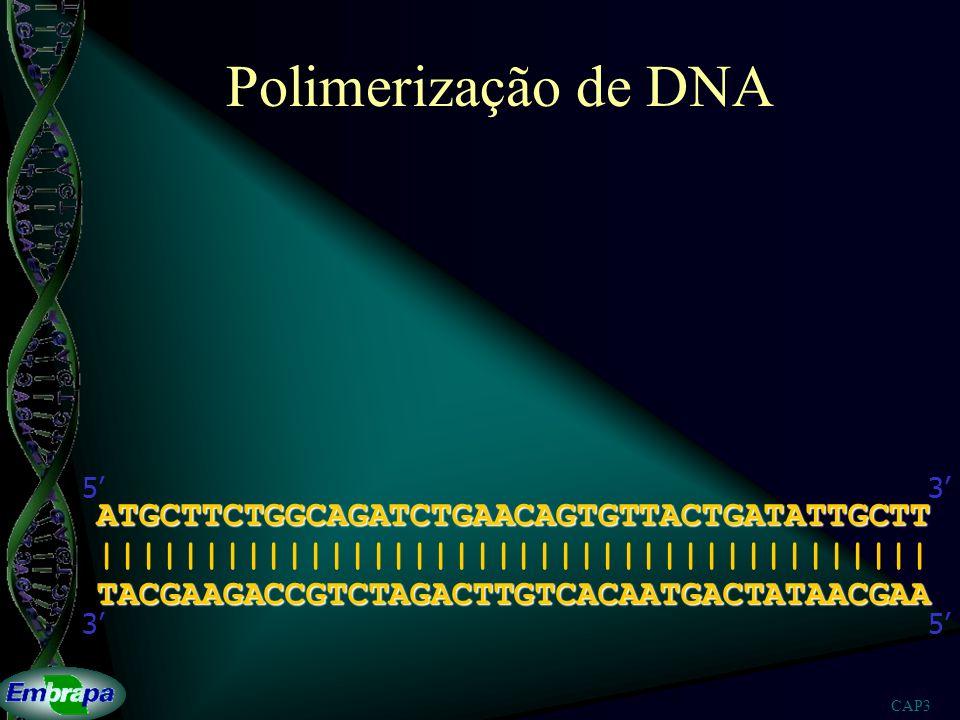 CAP3 Polimerização de DNA o dideoxi TACGAAGACCGTCTAGACTTGTCACAATGACTATAACGAA ||||||||||||||| 53 ATGCTTCTGGCAGAT 53A A A A A A A A A A T T T T T T T T T T T G G G G G G G G G C C C C C C C C C C C