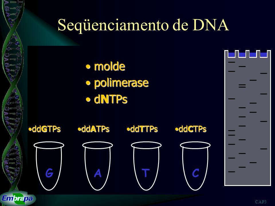 CAP3 Seqüenciamento de DNA GATC molde molde polimerase polimerase dNTPs dNTPs ddGTPsddGTPs ddATPsddATPs ddTTPsddTTPs ddCTPsddCTPs