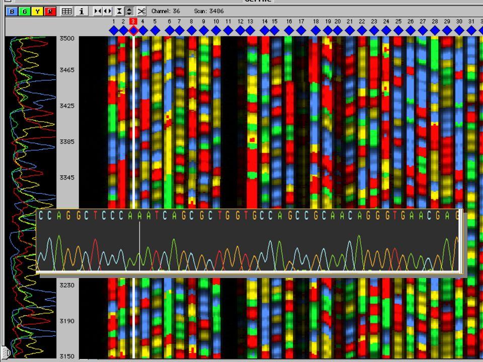 CAP3 Gel e cromatograma