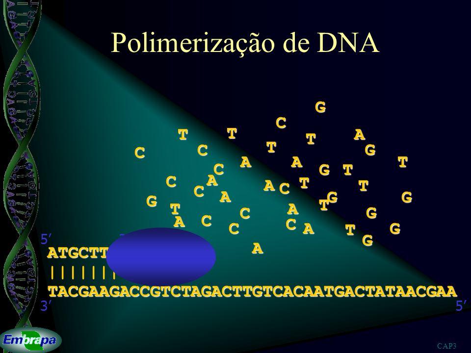 CAP3 Polimerização de DNA TACGAAGACCGTCTAGACTTGTCACAATGACTATAACGAA ||||||| 53 ATGCTTC 53 A A A A A A A A A A T T T T T T T T T T TGG G G G G G G G C C