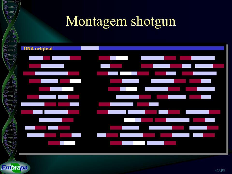 CAP3 Montagem shotgun DNA original