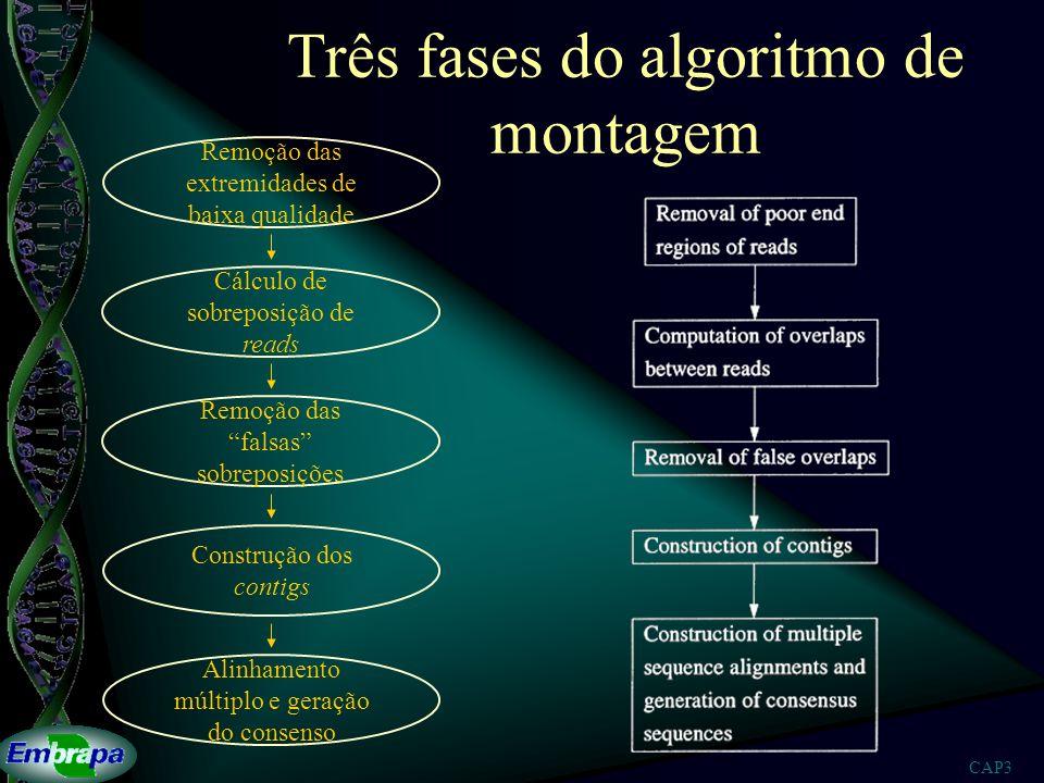 CAP3 Três fases do algoritmo de montagem Remoção das extremidades de baixa qualidade Cálculo de sobreposição de reads Remoção das falsas sobreposições