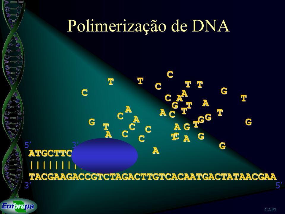CAP3 Um programa para montagem de seqüências de DNA Xiaoqiu Huang 1 and Anup Madan 2 1 Department of Computer Science, Michigan Technological University, Houghton, Michigan; 2 Department of Molecular Biotechnology, University of Washington, School of Medicine, Seattle, Washington Genome Research 9: 868-877