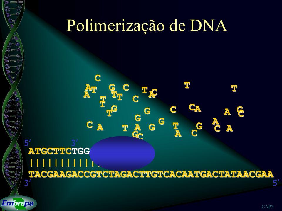 CAP3 Seqüenciamento de DNA ATGCTTCTGGCAGAT ATGCTTCTGGCAGATCTGAACAGTGTTACTGAT ATGCTTCTGGCAGATCTGAACAGTGT ATGCTTCTGGCAGATCTGAACAGTGTTACTGATATTGCTT ATGCTTCTGGCAGATCTGAACAGTGTTACTGATAT ATGCTTCTGGCAGATCTGAACAGTGTTACT ATGCTTCTGGCAGATCTGAACAGT ATGCTTCTGGCAGATCTGAACAGTGTTACTGATATTGCT ATGCTTCTGGCAGATCTGAACAGTGTTACTGATATT ATGCTTCT ATGCTTCTGGCAGATCT ATGCTTCTGGCAGATCTGAACAGTGTTACTGATATTGCTT ATGCTTCTGGCAGATCTGAACAGTGTT TACGAAGACCGTCTAGACTTGTCACAATGACTATAACGAA |||||||||||||||||||||||||||||||||||||||| 53