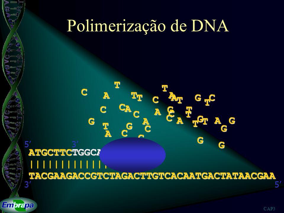 CAP3 Seqüenciamento de DNA ATGCTTCTGGCAGAT ATGCTTCTGGCAGATCTGAACAGTGTTACTGAT ATGCTTCTGGCAGATCTGAACAGTGT ATGCTTCTGGCAGATCTGAACAGTGTTACTGATATTGCTT ATGCTTCTGGCAGATCTGAACAGTGTTACTGATAT ATGCTTCTGGCAGATCTGAACAGTGTTACT ATGCTTCTGGCAGATCTGAACAGT ATGCTTCTGGCAGATCTGAACAGTGTTACTGATATTGCT ATGCTTCTGGCAGATCTGAACAGTGTTACTGATATT ATGCTTCT ATGCTTCTGGCAGATCT ATGCTTCTGGCAGATCTGAACAGTGTTACTGATATTGCTT ATGCTTCTGGCAGATCTGAACAGTGTT