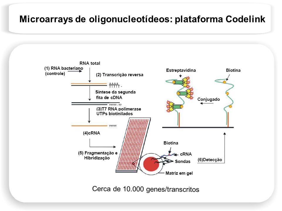 Microarrays de oligonucleotídeos: plataforma Codelink Cerca de 10.000 genes/transcritos