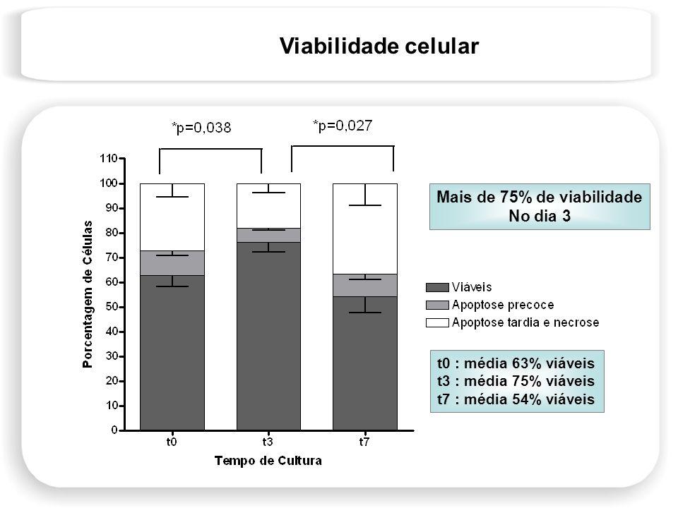 Viabilidade celular Mais de 75% de viabilidade No dia 3 t0 : média 63% viáveis t3 : média 75% viáveis t7 : média 54% viáveis