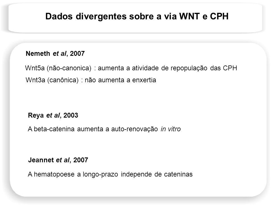 Dados divergentes sobre a via WNT e CPH Wnt5a (não-canonica) : aumenta a atividade de repopulação das CPH Wnt3a (canônica) : não aumenta a enxertia Ne
