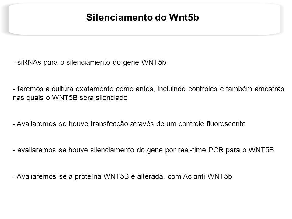 Silenciamento do Wnt5b - siRNAs para o silenciamento do gene WNT5b - faremos a cultura exatamente como antes, incluindo controles e também amostras na