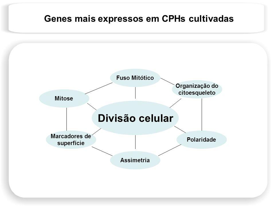 Genes mais expressos em CPHs cultivadas Divisão celular Mitose Fuso Mitótico Organização do citoesqueleto Polaridade Assimetria Marcadores de superfíc
