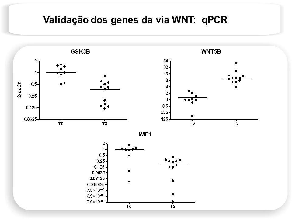Validação dos genes da via WNT: qPCR