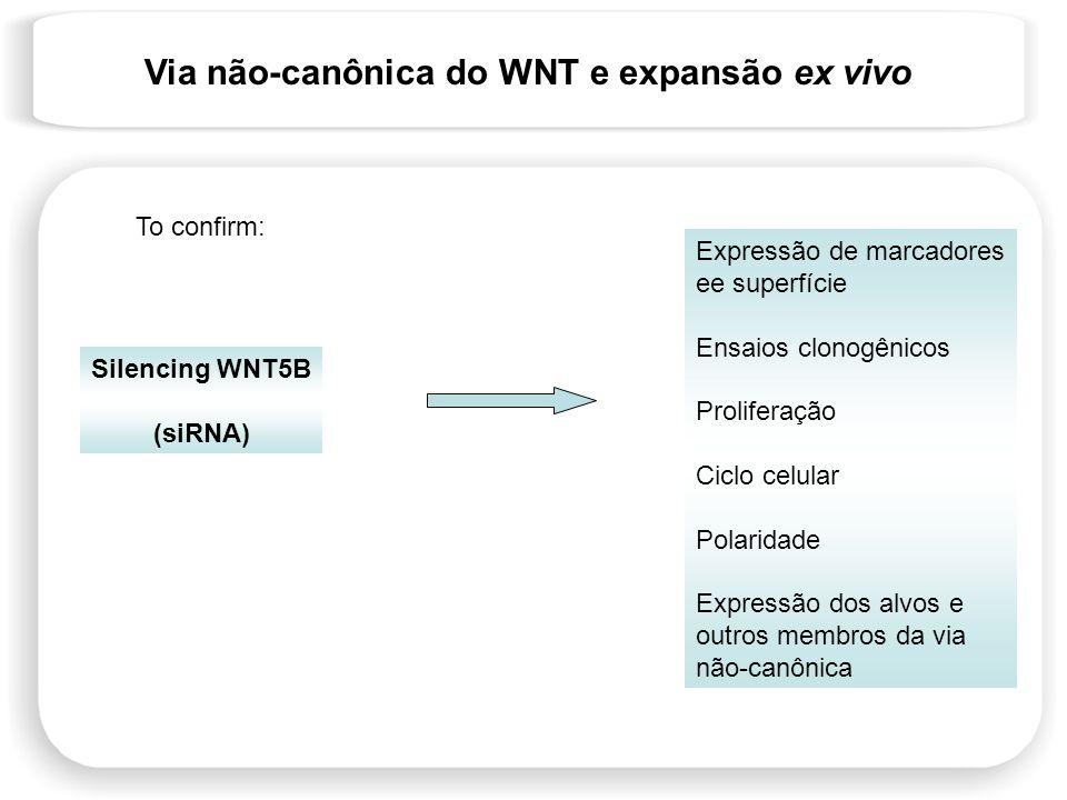 Via não-canônica do WNT e expansão ex vivo Silencing WNT5B (siRNA) Expressão de marcadores ee superfície Ensaios clonogênicos Proliferação Ciclo celul