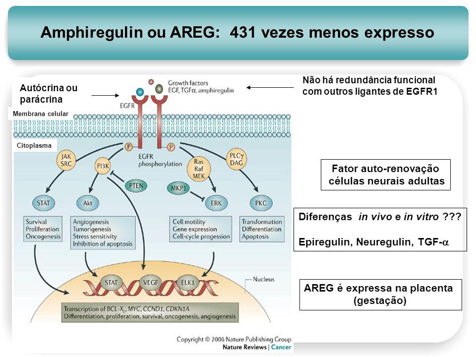 Amphiregulin ou AREG: 431 vezes menos expresso Não há redundância funcional com outros ligantes de EGFR1 Autócrina ou parácrina Fator auto-renovação c