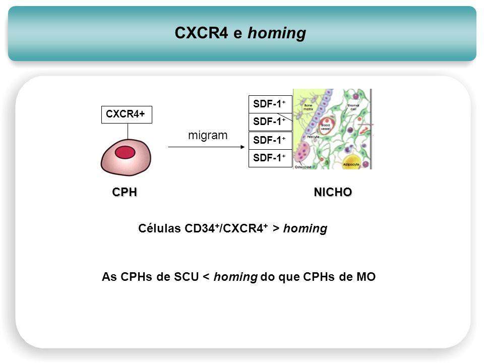 Células CD34 + /CXCR4 + > homing CXCR4 e homing CXCR4+ SDF-1 + NICHOCPH migram SDF-1 + As CPHs de SCU < homing do que CPHs de MO