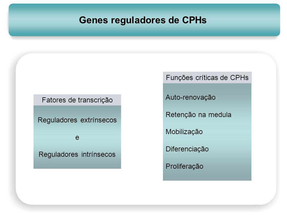 Genes reguladores de CPHs Auto-renovação Retenção na medula Mobilização Diferenciação Proliferação Funções críticas de CPHs Fatores de transcrição Reg