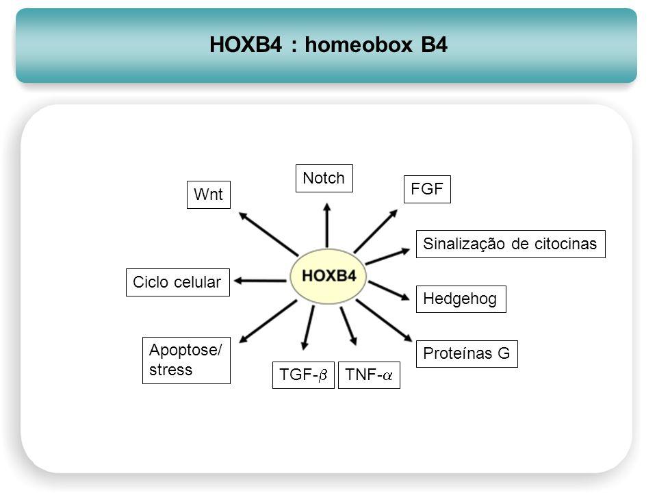 Notch FGF Sinalização de citocinas Hedgehog Proteínas G TNF- TGF- Apoptose/ stress Ciclo celular Wnt HOXB4 : homeobox B4