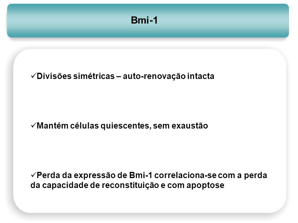 Bmi-1 Divisões simétricas – auto-renovação intacta Mantém células quiescentes, sem exaustão Perda da expressão de Bmi-1 correlaciona-se com a perda da