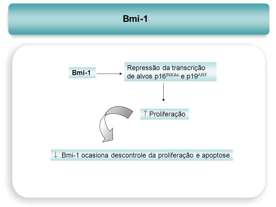 Bmi-1 Bmi-1 ocasiona descontrole da proliferação e apoptose Repressão da transcrição de alvos p16 INK4a e p19 ARF Proliferação