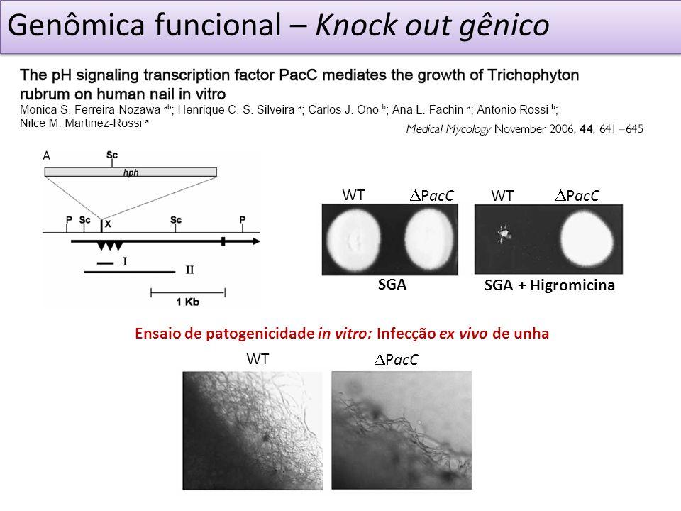 WT Genômica funcional – Knock out gênico WT PacC SGA + Higromicina SGA Ensaio de patogenicidade in vitro: Infecção ex vivo de unha