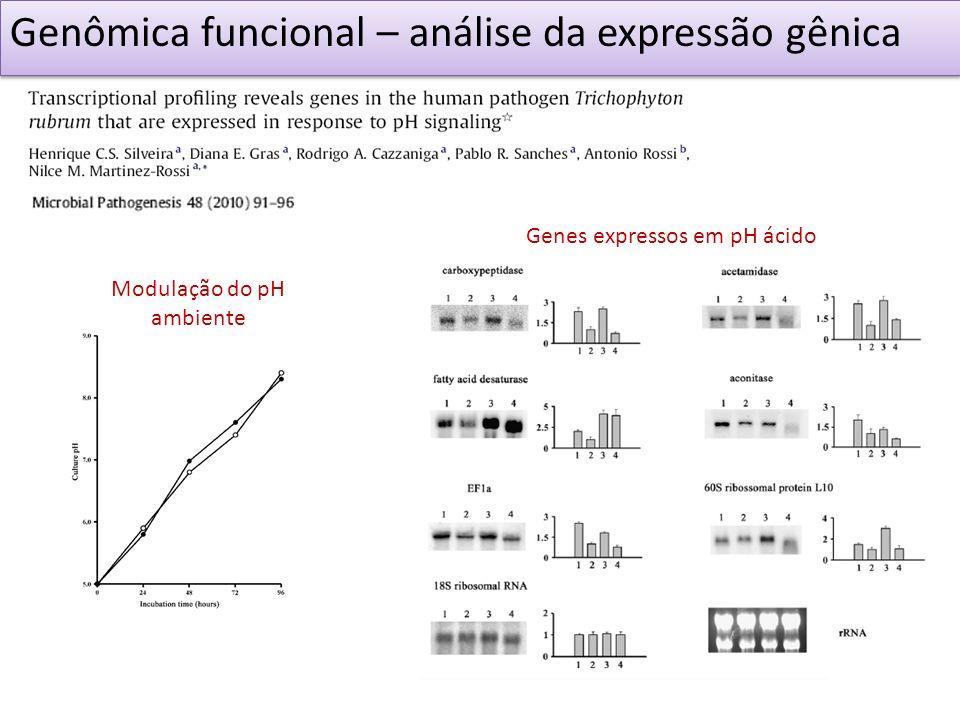 Genômica funcional – análise da expressão gênica Modulação do pH ambiente Genes expressos em pH ácido
