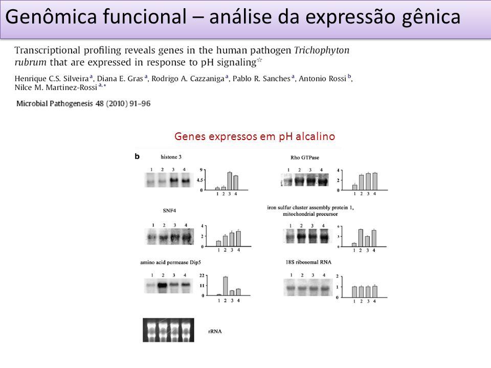 Genômica funcional – análise da expressão gênica Genes expressos em pH alcalino