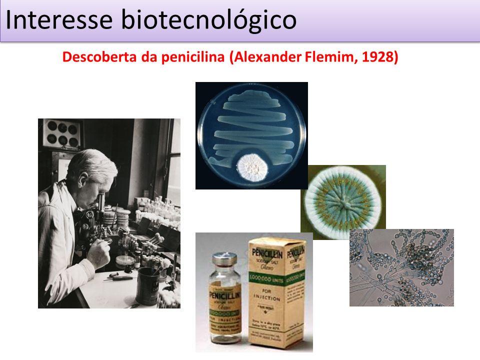 Interesse biotecnológico Descoberta da penicilina (Alexander Flemim, 1928)